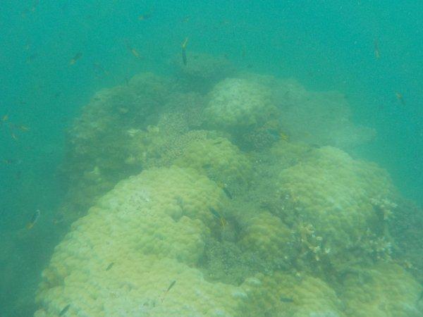 ケアンズ フランクランド諸島のノーマンビー島