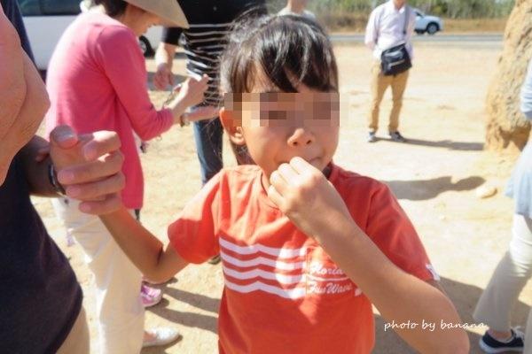 ケアンズ 子供おすすめツアー ジェイさんの動物探検ツアー アリ塚