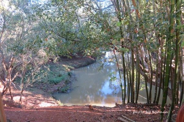 ケアンズ ジェイさんの動物探検ツアー 野生カモノハシ観察 cairns platypus