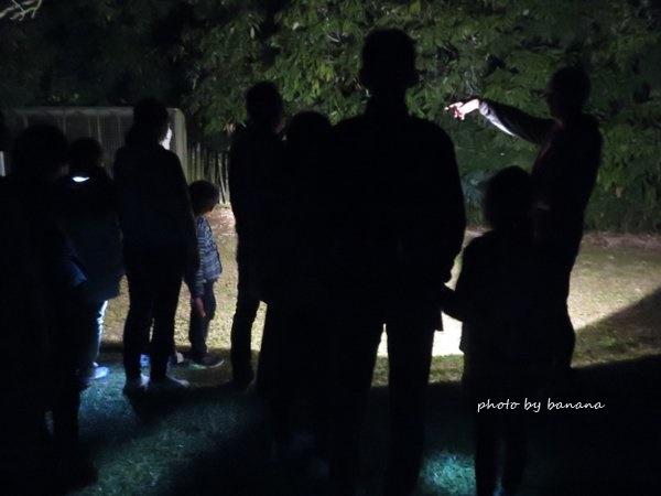 ケアンズ ジェイさんの動物探検ツアー 夜行性動物探し