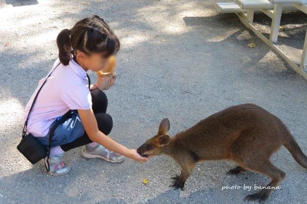 ポートダグラス ワイルドライフ・ハビタット wallaby  ワラビー PortDouglas The Wildlife Habitat