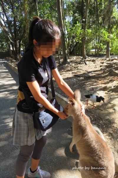 ワイルドライフ・ハビタット カンガルー餌付け Hand Feeds Kangaroos The Wildlife Habitat
