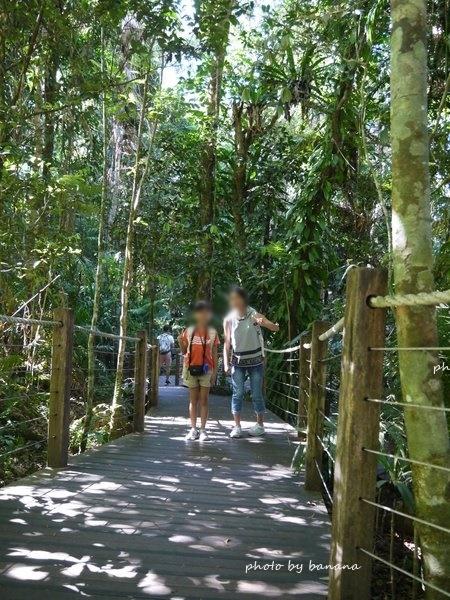 ケアンズ ジェイさんツアー キュランダ観光 スカイレール 熱帯雨林散策