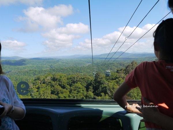 ケアンズ ジェイさんツアー キュランダ観光 スカイレール 熱帯雨林散策94