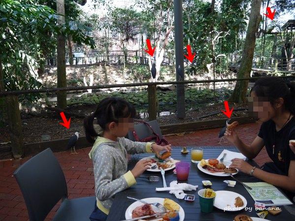 ポートダグラス ワイルドライフ・ハビタット 鳥と朝食 PortDouglas The Wildlife Habitat  Breakfast with the Birds